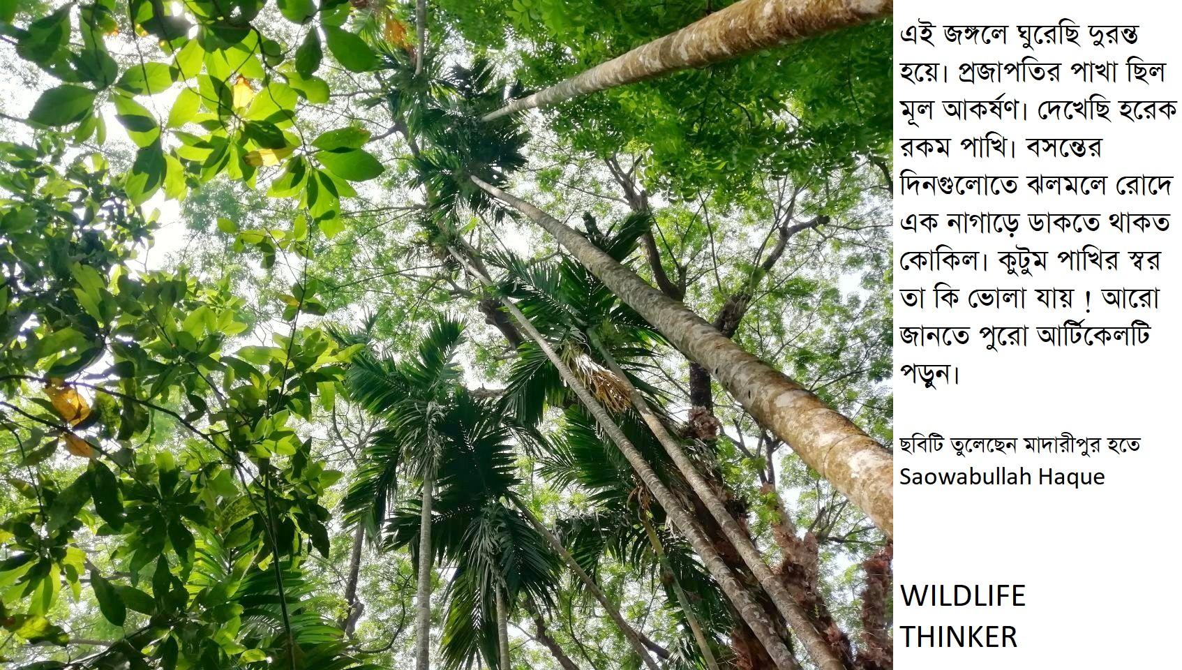 ছেলেবেলার জীব বৈচিত্র্য বনাম এবেলার জীব বৈচিত্র্য – দ্বিতীয় এবং শেষ পর্ব